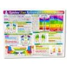 Original Laminated Charts Foot Reflex Chart (rainbow coded) eaches
