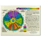 Original Laminated Charts Iridology Chart (rainbow coded) eaches